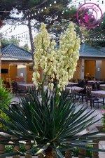 Gilavar Restoran Gənclik